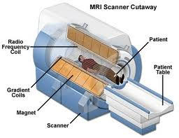 MRI Cross Section